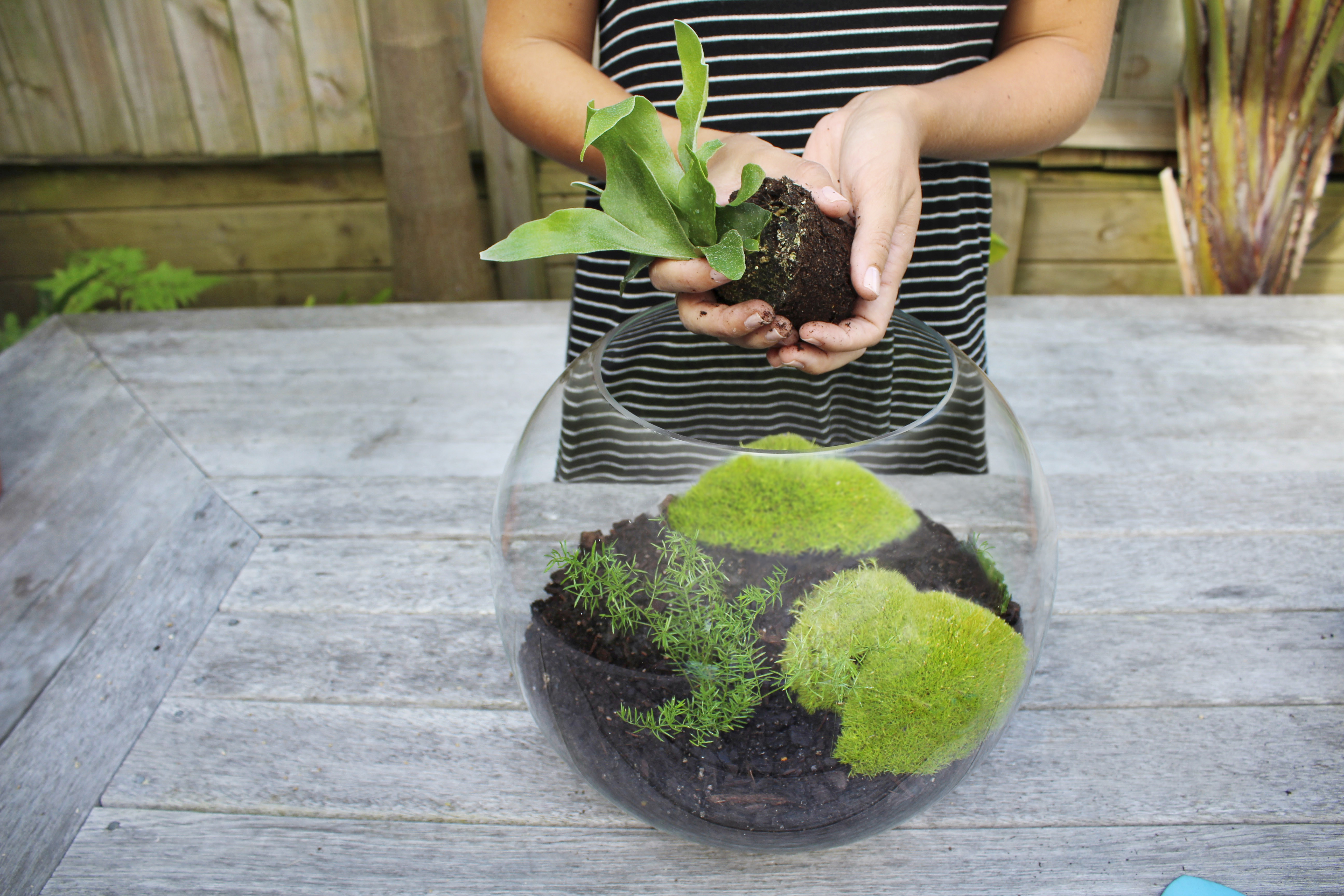 How To Create Your Own Terrarium
